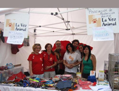 Feria adopción Pinto