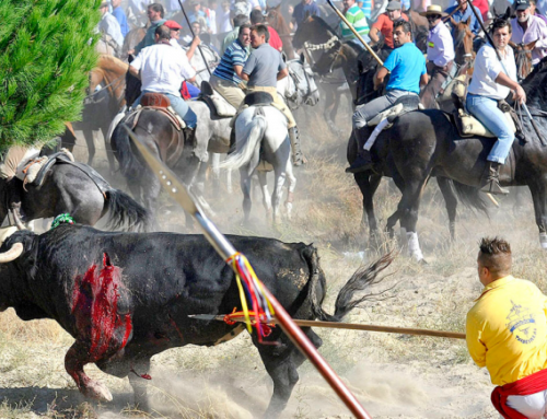 Manifestación ¡STOP Toro de la Vega! Madrid 14 de septiembre